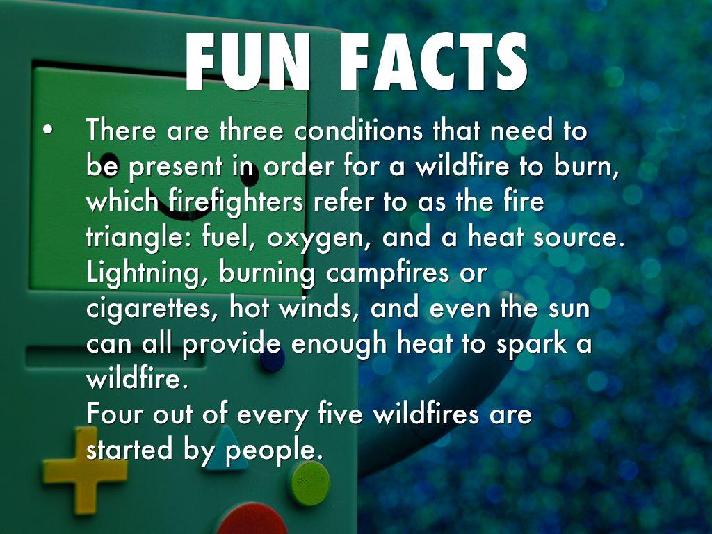 Forest Fires by Brayden Tam