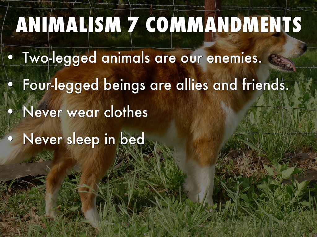 seven commandments of animal farm • students are to choose a character from animal farm and write a character sketch • the character sketch should be approximately.