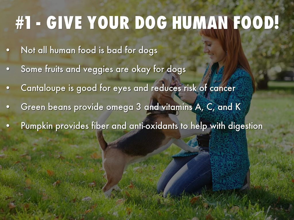Top Most Nutritious Dog Foods