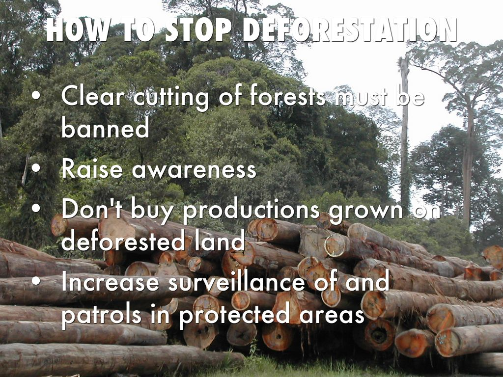 ways to stop deforestation What can be done to stop the rain forests from  one of the most effective ways every citizen around the world can help prevent deforestation immediately is.