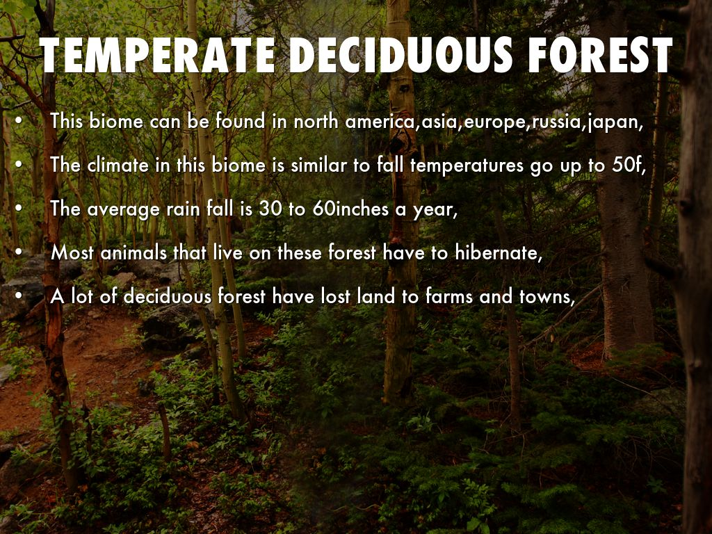 deciduous and temperate evergreen forest The temperate evergreen forests are located in the mid-latitudinal coastal regionthey are commonly found along the eastern margin of the continents,eg,in south.