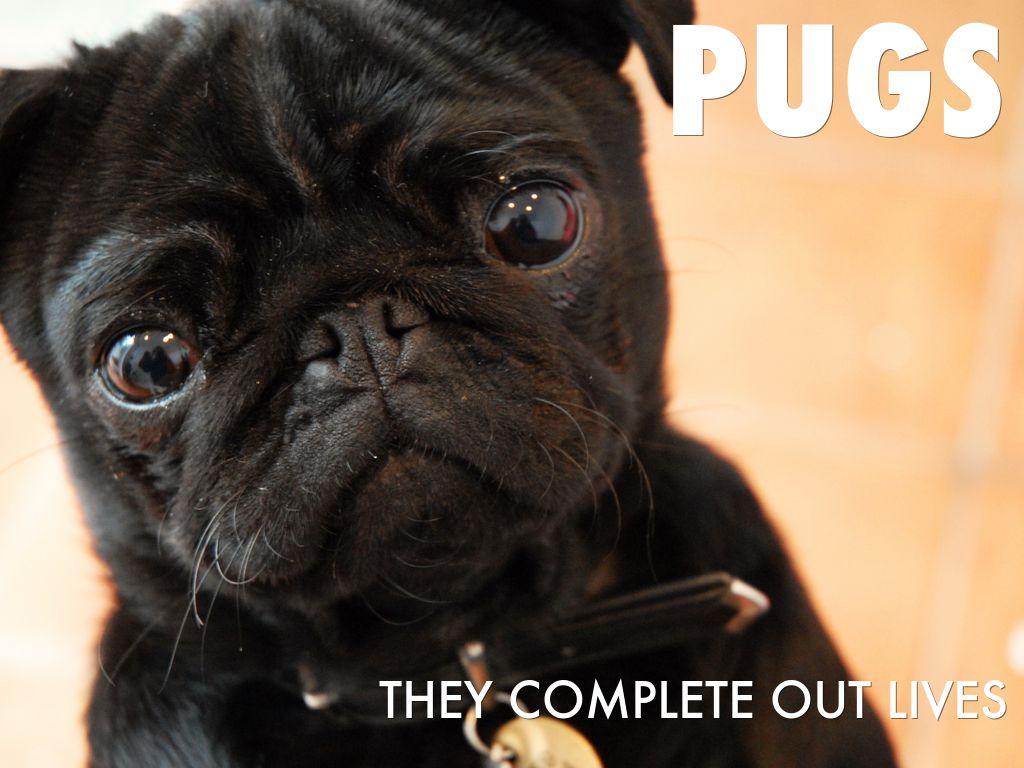 pug life by quinn robinson