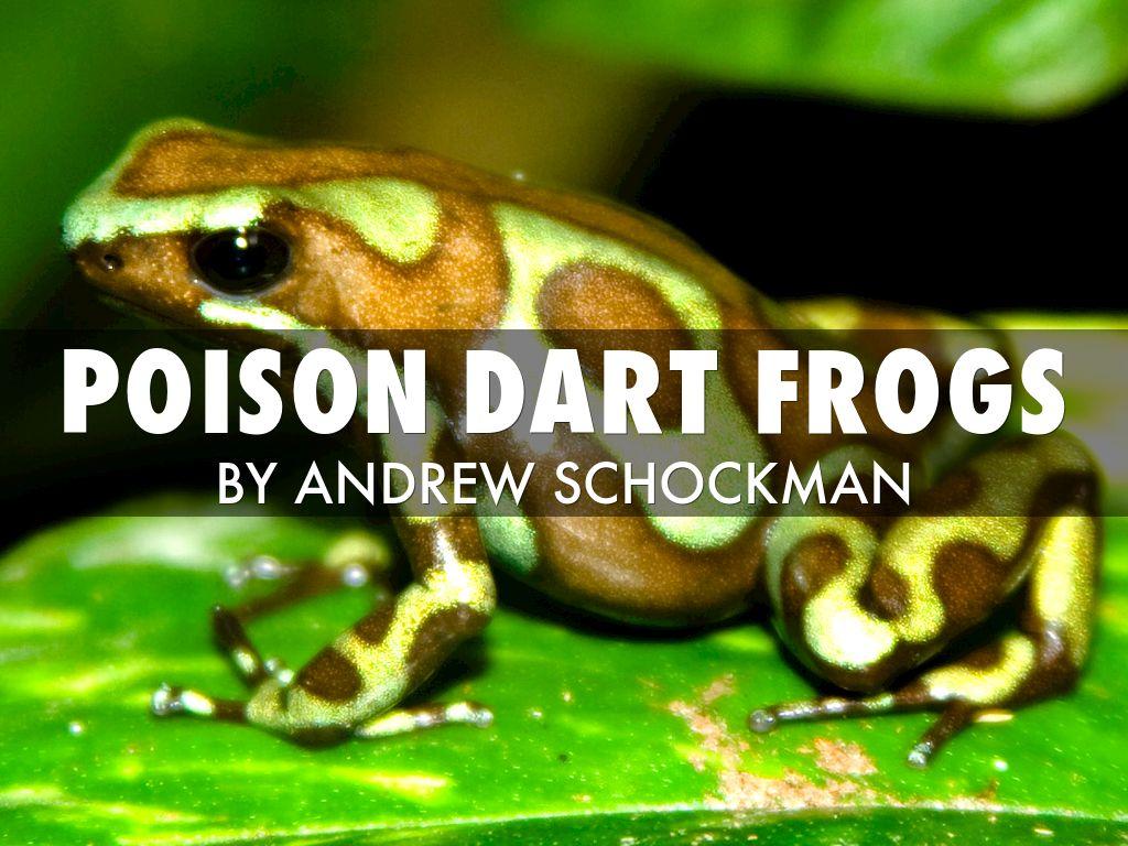 Frogs eat