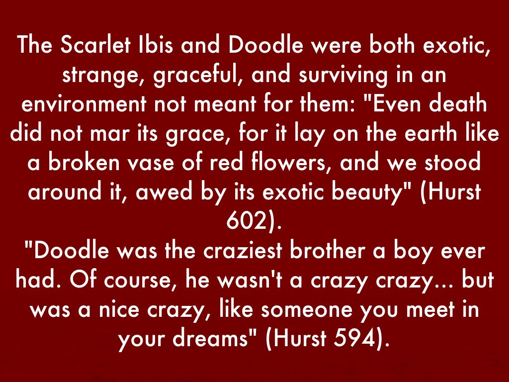 """scarlet ibis guilty After reading the short story """"the scarlet ibis"""" by james hurst, students will   prepare persuasive speeches for the jury in regards to the guilt or innocence of  the."""