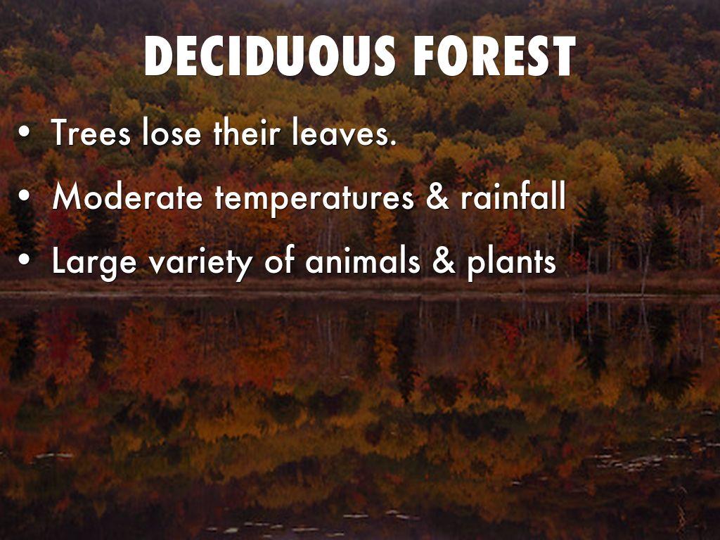 Boreal Forests – Taiga