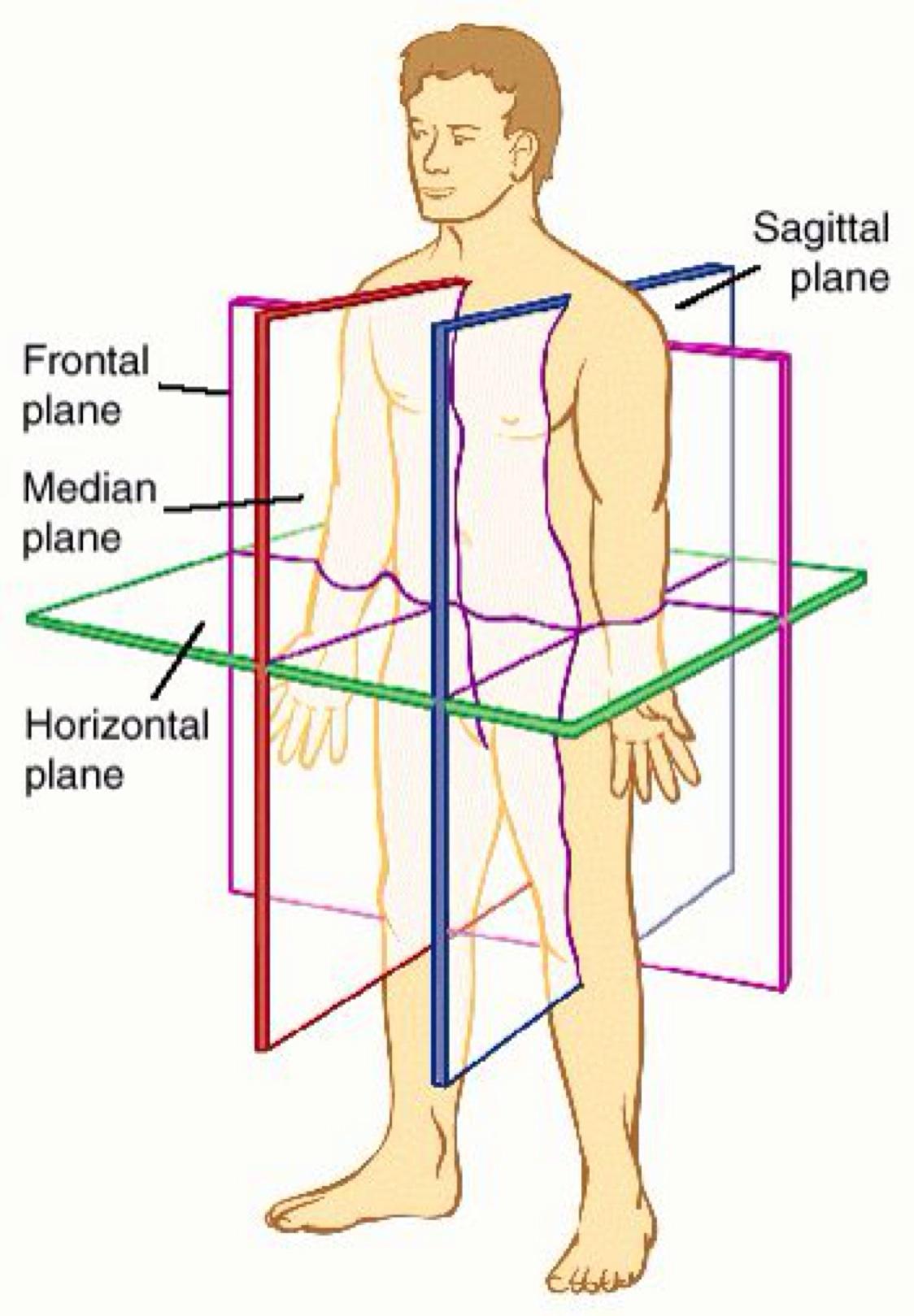 Anatomy by Norbert Jennings