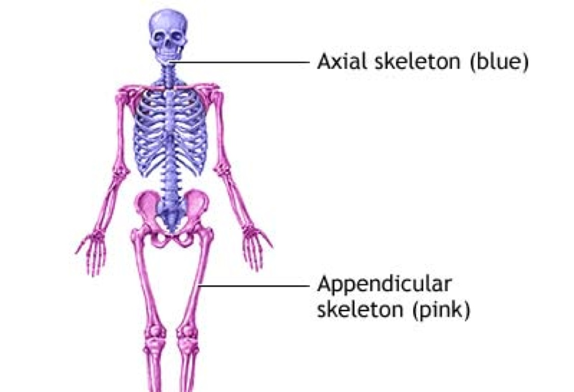 Anatomy Terms by Erin Pennington