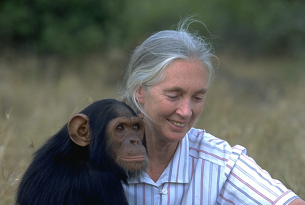 Jane Goodall by kaitlinwilliams205