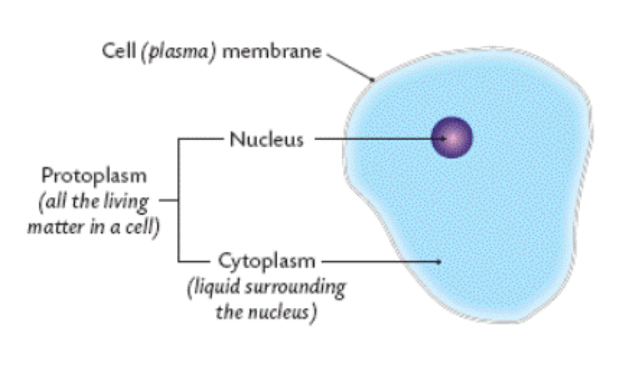 Cells By Trey Turner 89 B2 Wiring Diagram