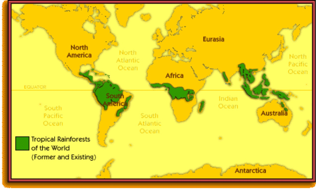 an analysis of types and importance of rainforests in latin and south america africa and southeast a This paper presents a map of africa's rainforests analysis of variance over the congo is limited with respect to southeast asia and latin america.