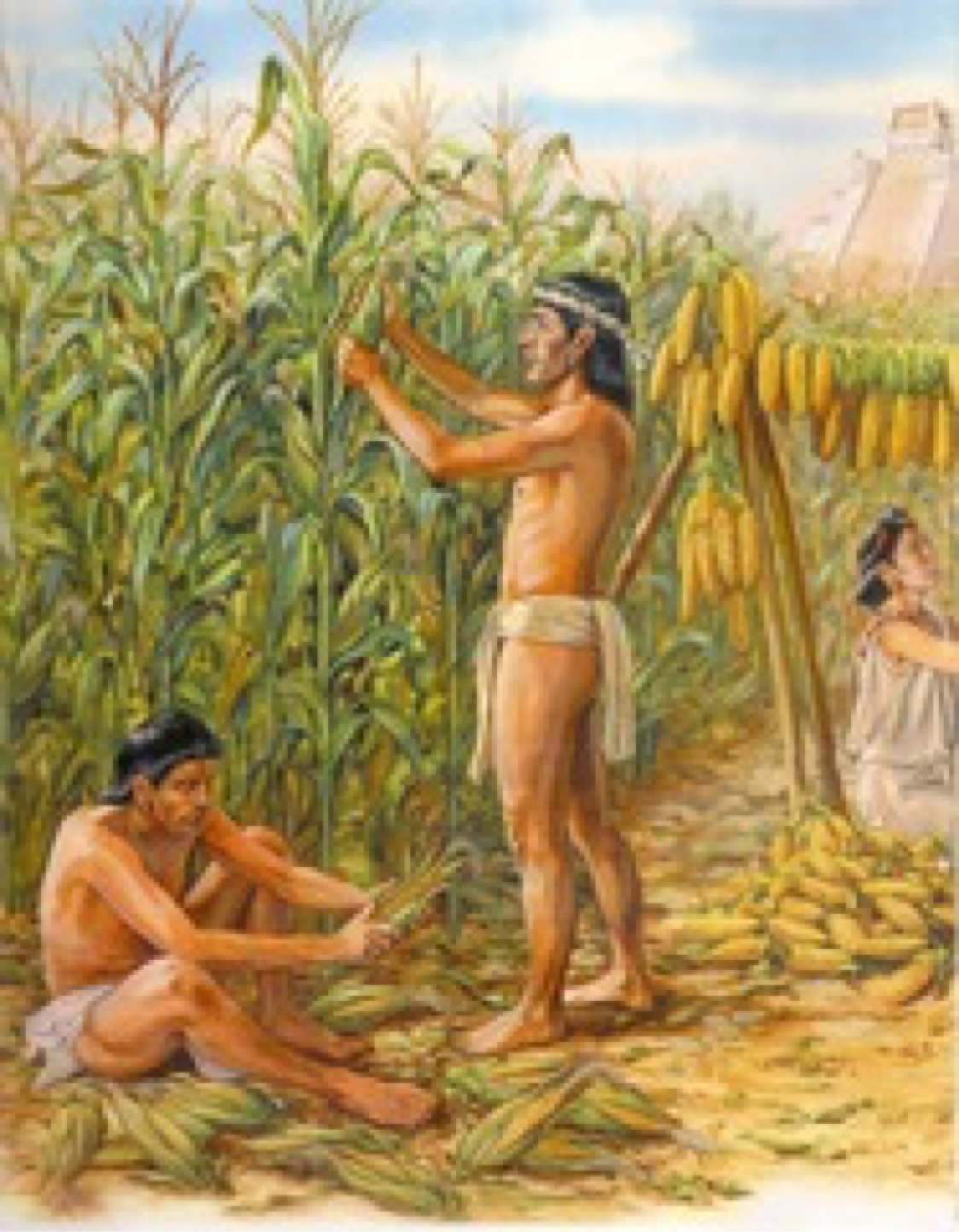 Just as other aspects of this society Aztec agriculture was highly developed and has become famous in studies of history From the chinampas to the terrace crops