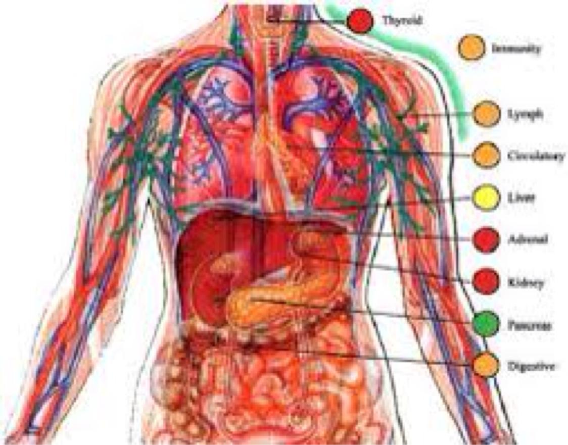 Jose Pimentel Vazquez Science Cell Tissue Organ System