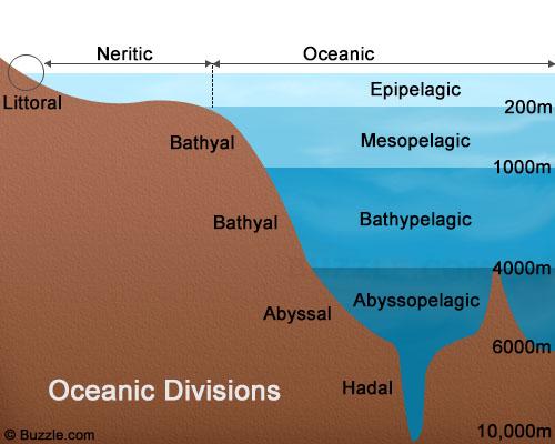 The Ocean Biomes by Susie Lute