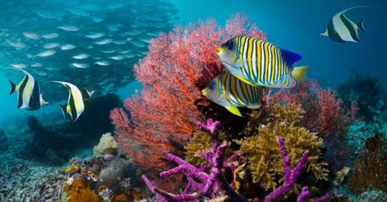 Ocean Plants by Kim Broadhead