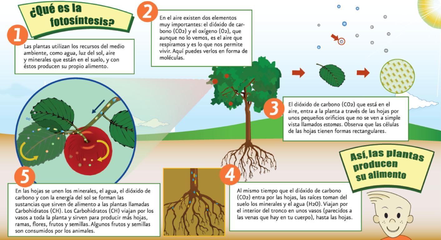 Método Científico by Diana Cruz