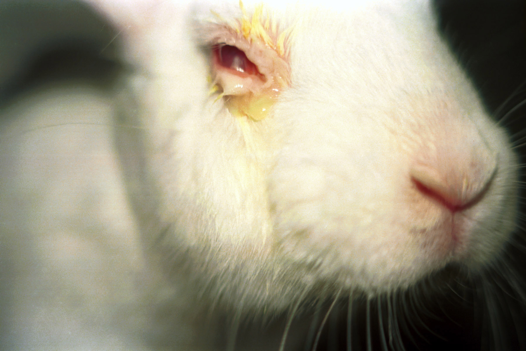 should animal testing be banned? by cloie anne