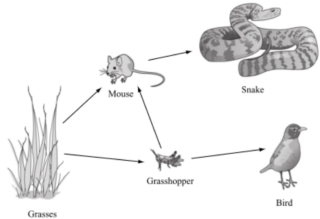 Ecology Vocabulary By Amanda Masi
