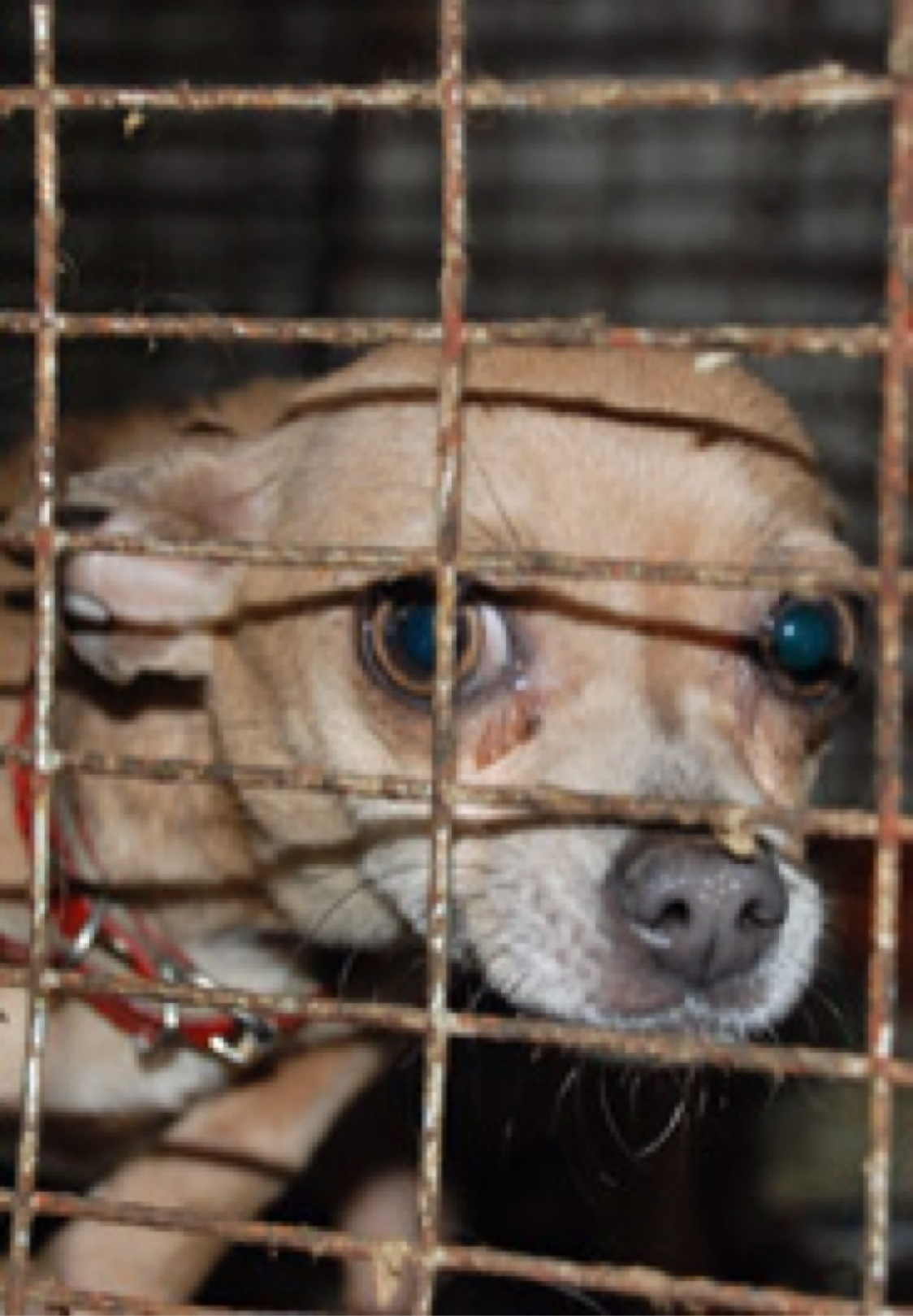 Missouri puppy mill rescue ASPCA     Wikipedia