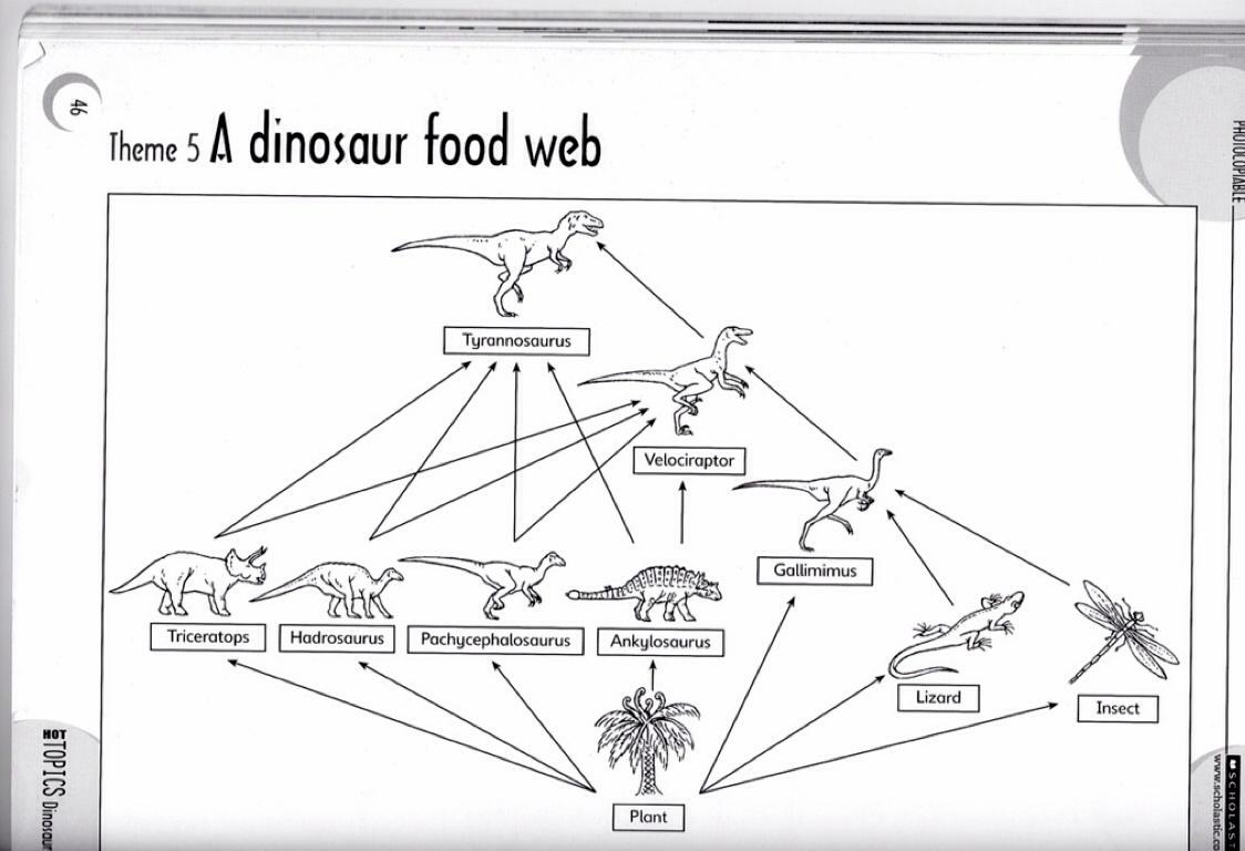 Dinosaur Food Chain Diagram on Food Chains Webs