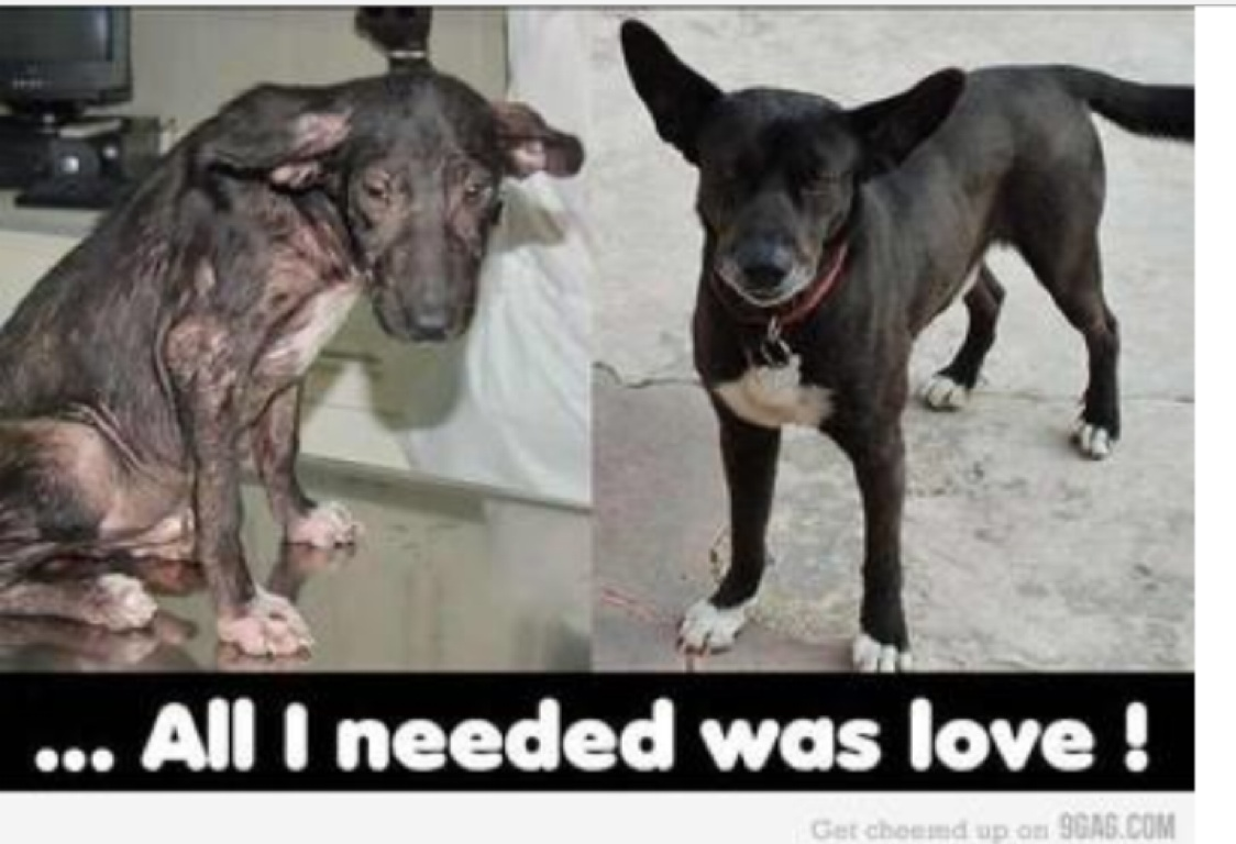 Animal Cruelty Quotes Animal Abusevalencia Vallejo