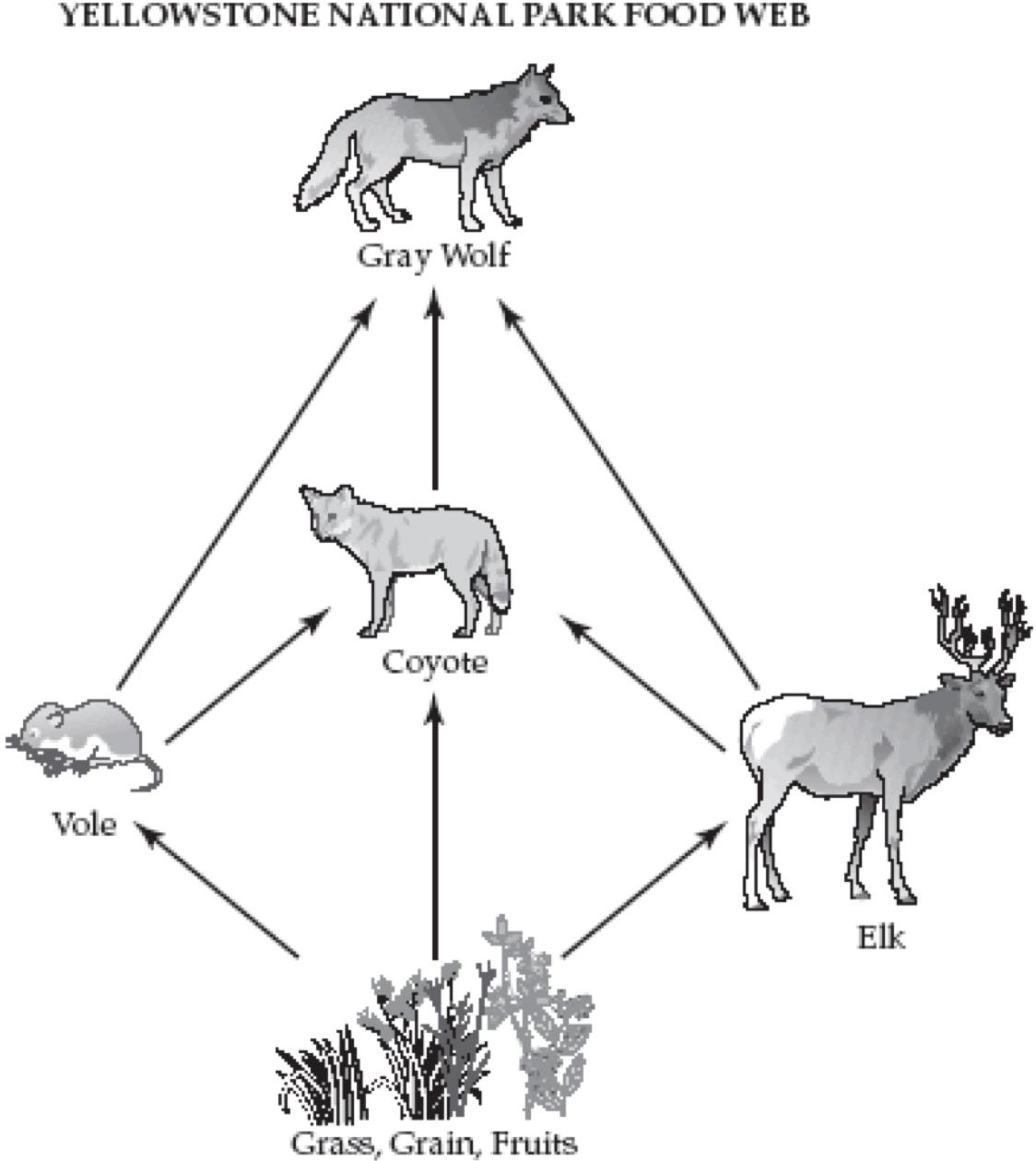 Unique Grey Wolf Anatomy Ideas - Anatomy Ideas - yunoki.info