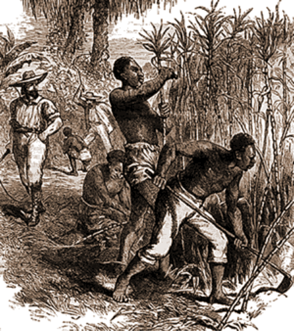caribbean slavery The slavery abolition act 1833 of parliament of the united kingdom abolished slavery throughout the british empire.