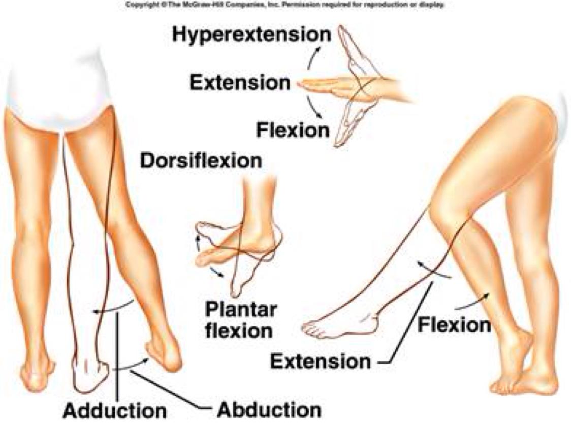 Leg Movement Diagram - DIY Enthusiasts Wiring Diagrams •