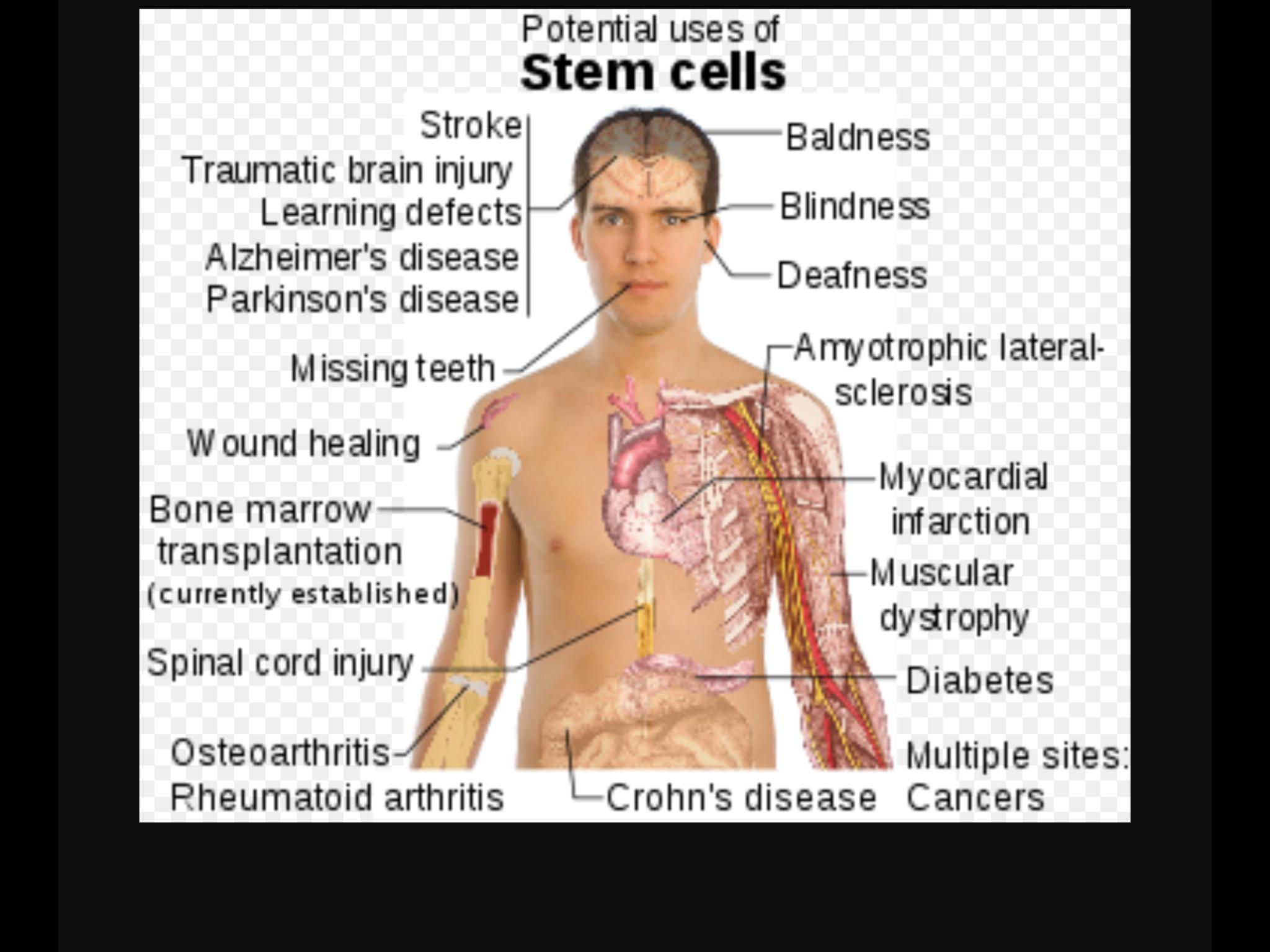 Embryonic Stem Cells by Antonia Portelos