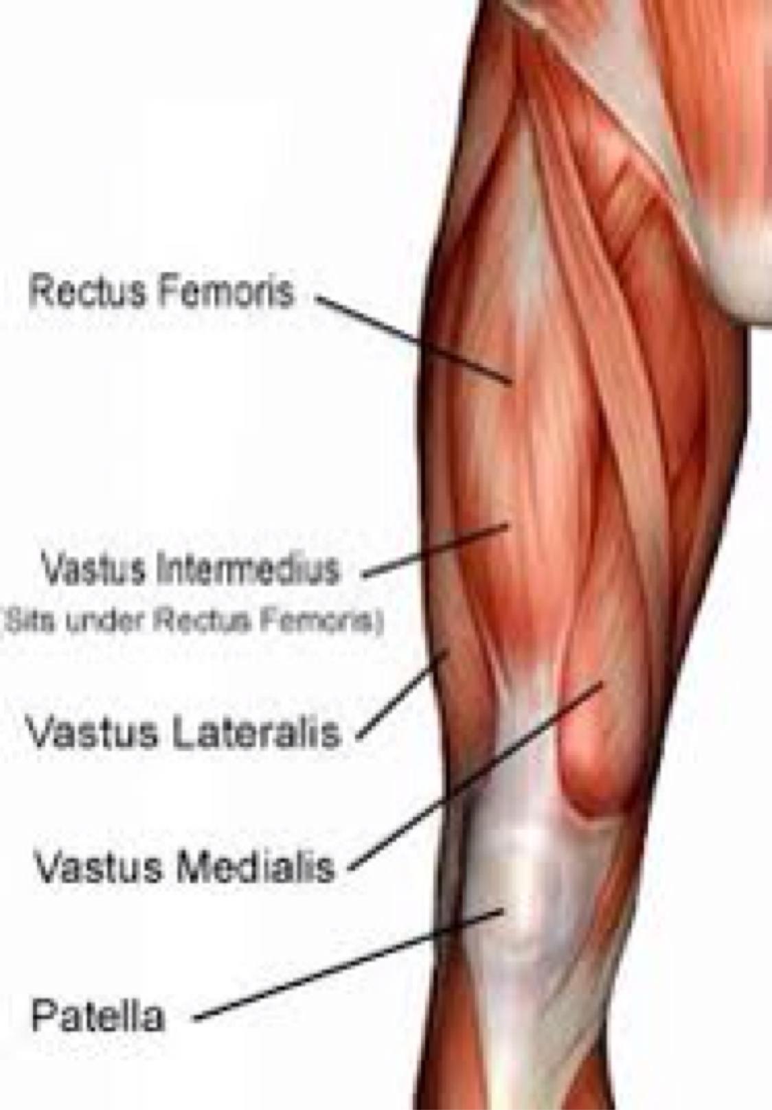 Muscular System By Betsy Elliott