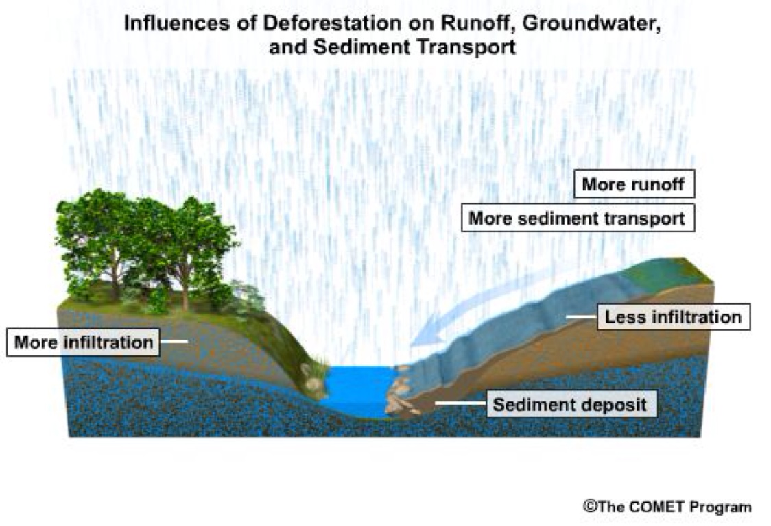 deforestation by derick leigon