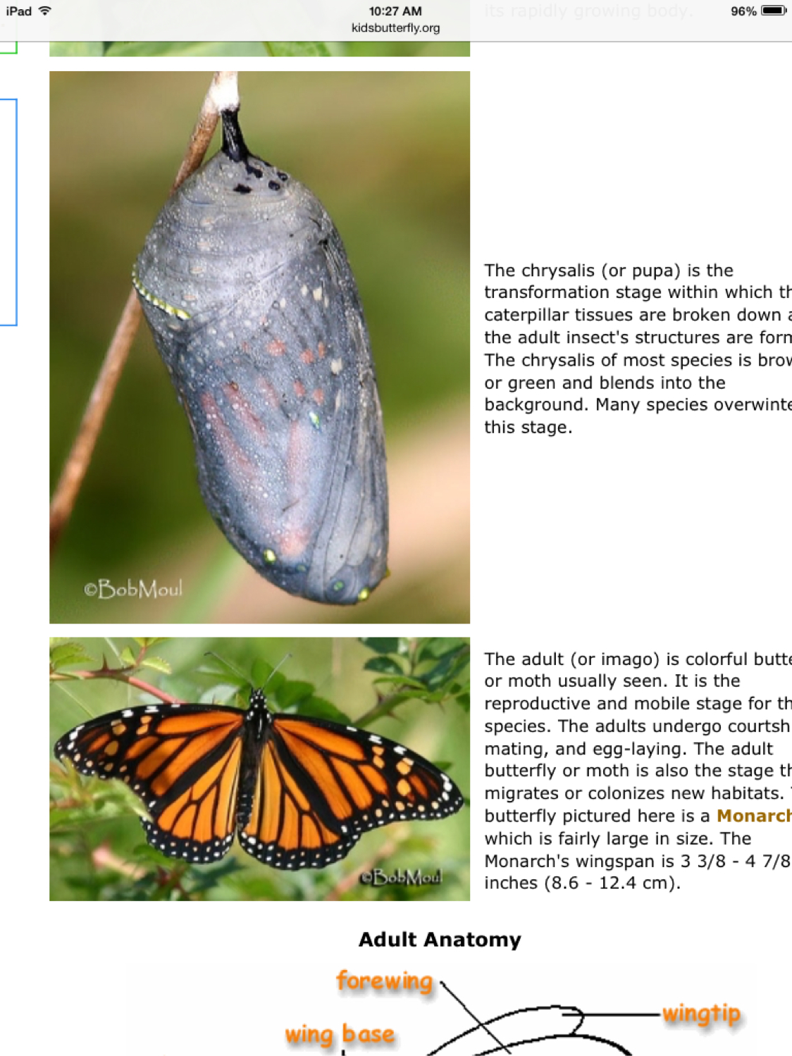 Butterfly Life Cycle by Josephine Barbour