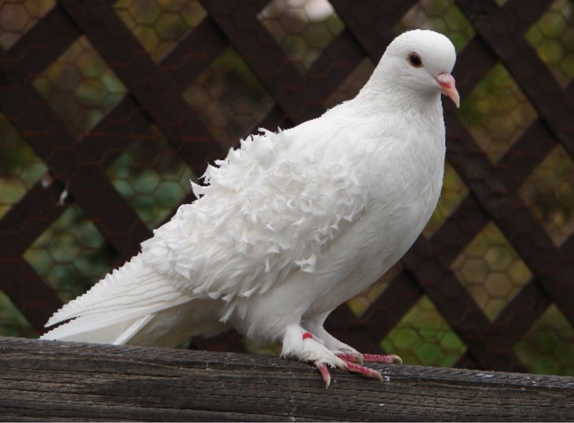 Птичка залетела на балкон, примета w-mir.ru.