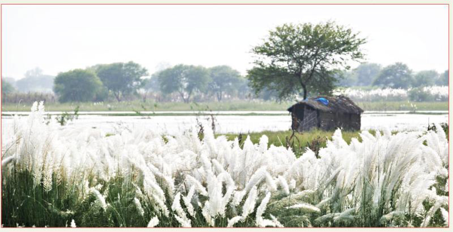 Natural Beauty Of Bangladesh by Wafa I