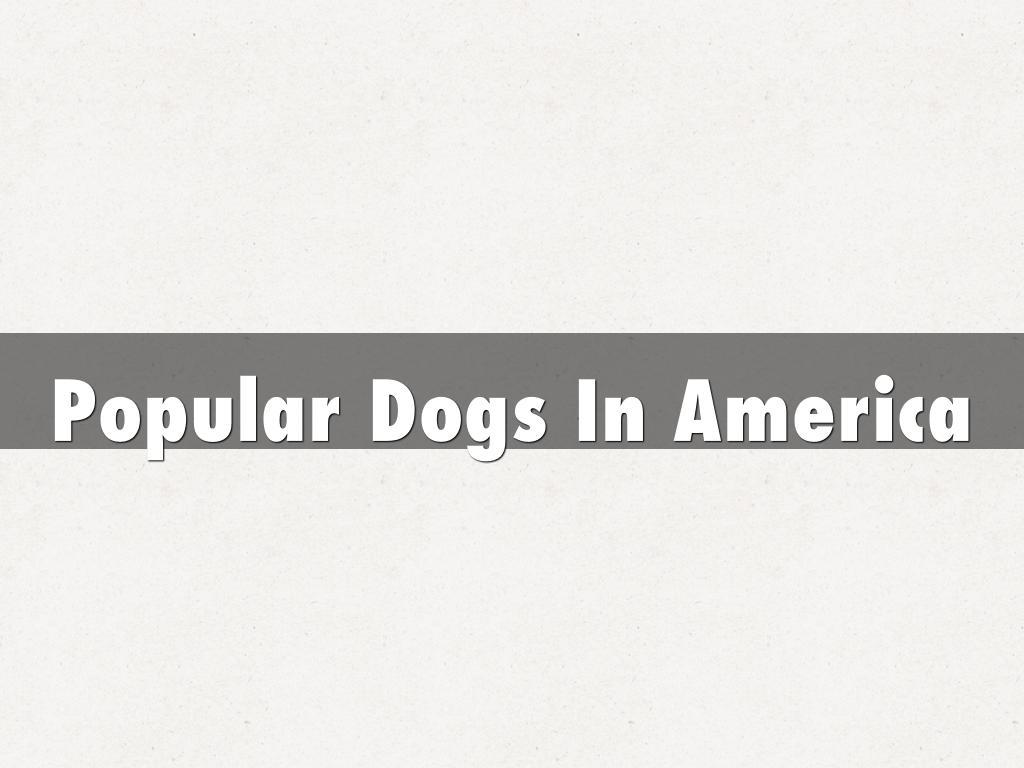 Popular Dogs In America