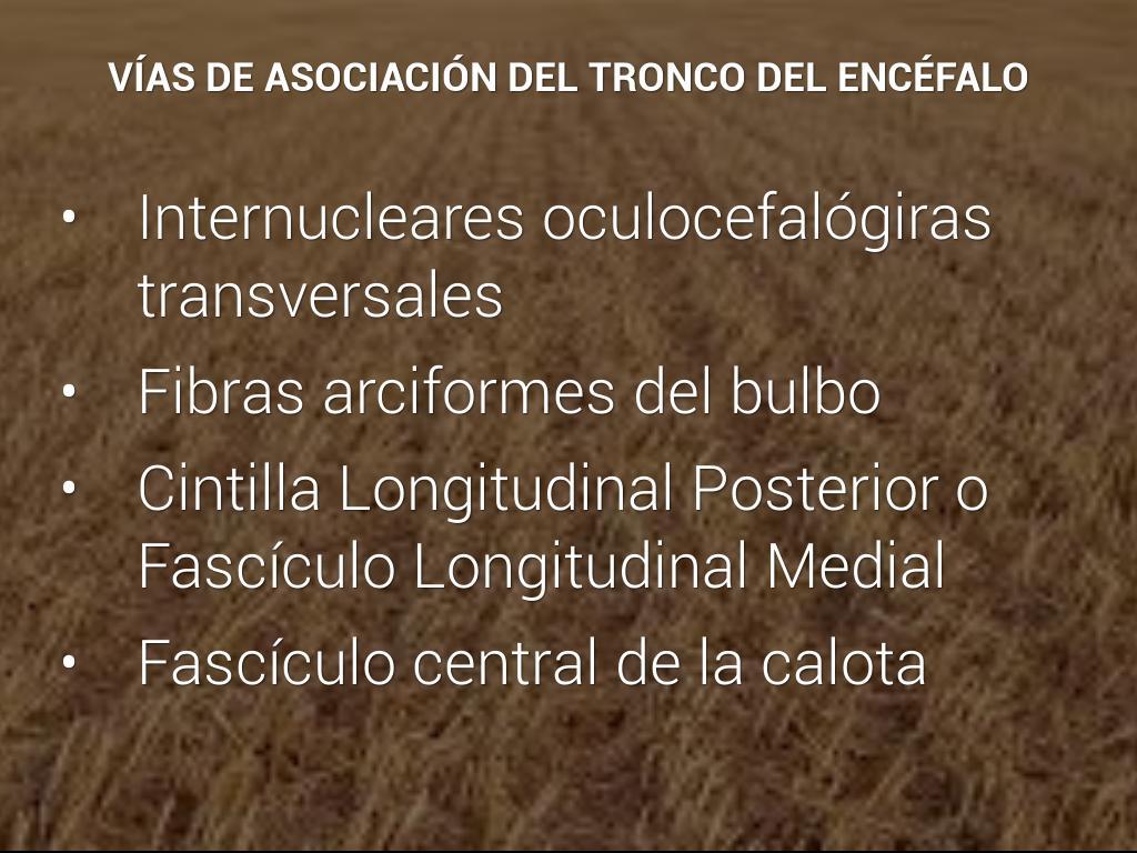 ANATOMIA MACROSCOPICA DEL TRONCO ENCEFALICO by