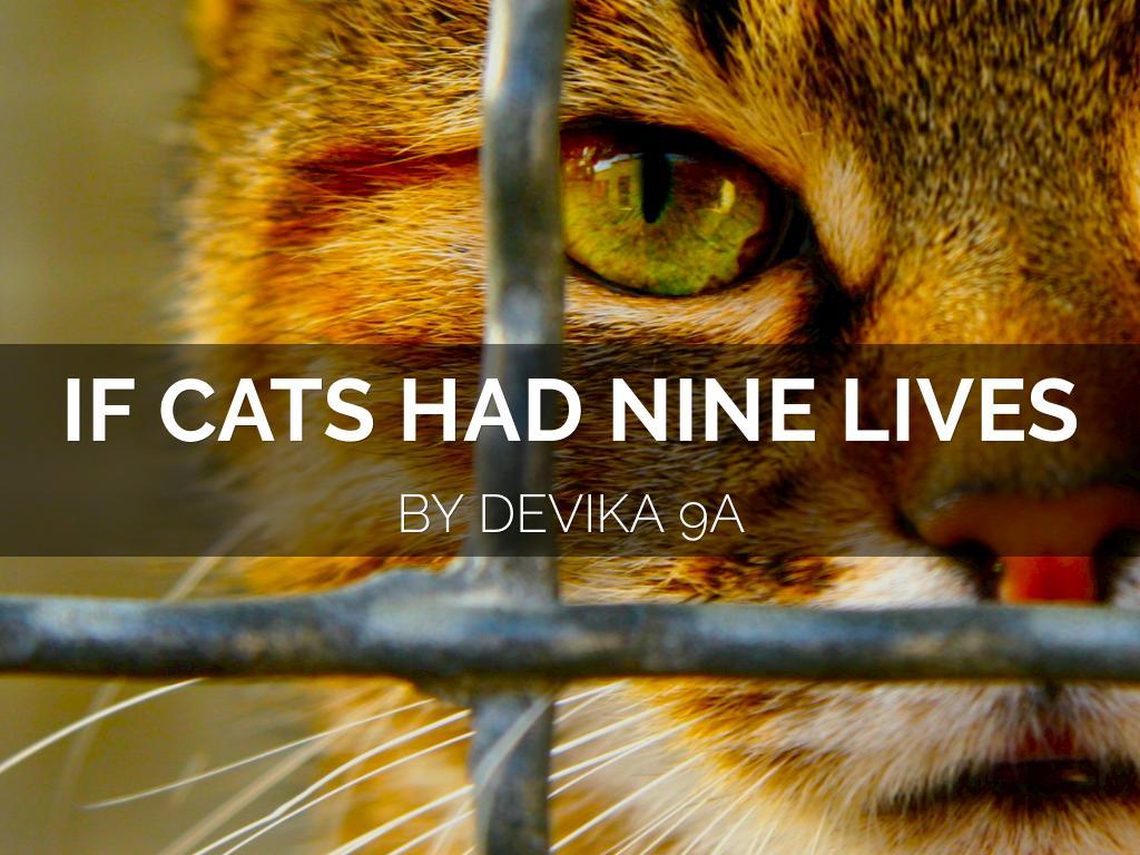 Cat's 9 Lives