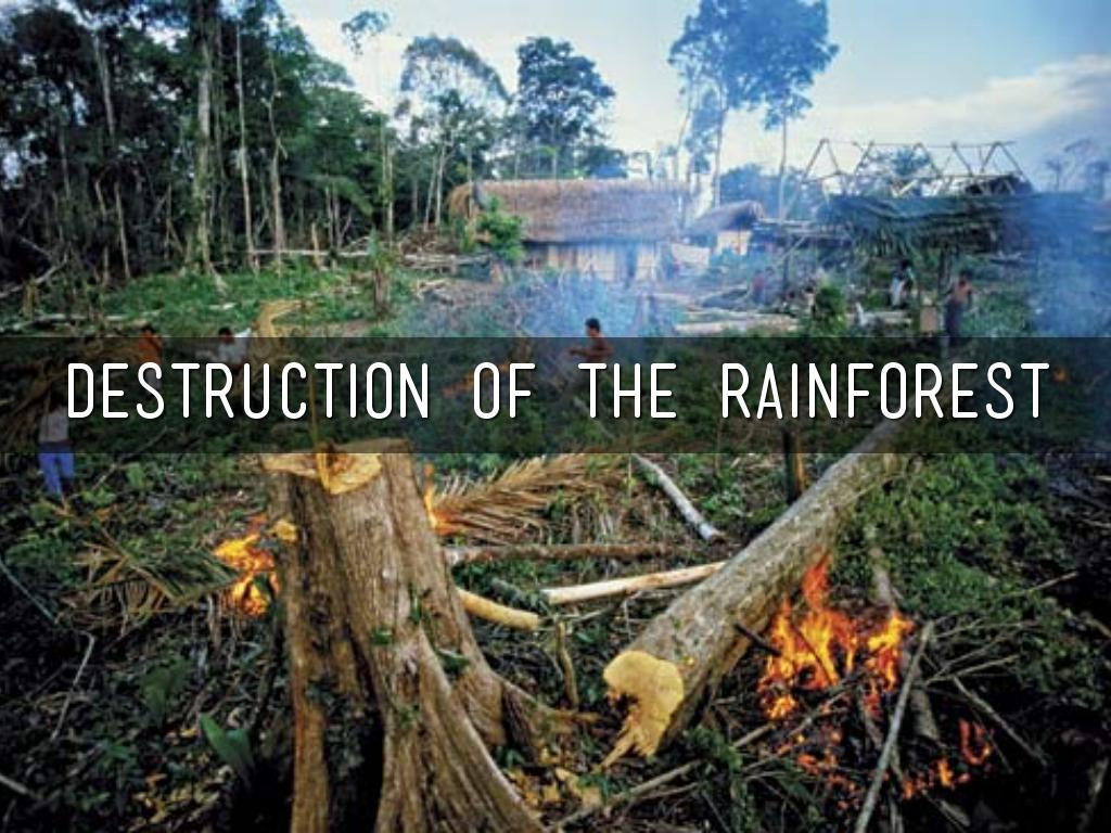 two major causes of the destruction of the rainforest Deforestation effects, causes, and examples : a top 10 list 1 agriculture  this included at least two species of rails, two species of parrots, and a heron species  animal and insect species every day as a result of rainforest deforestation that means that around 50,000 species are going extinct every year currently.