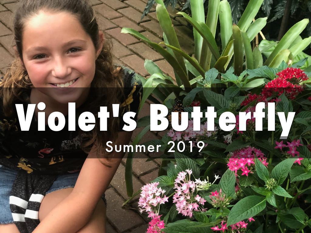 Violet's Butterfly
