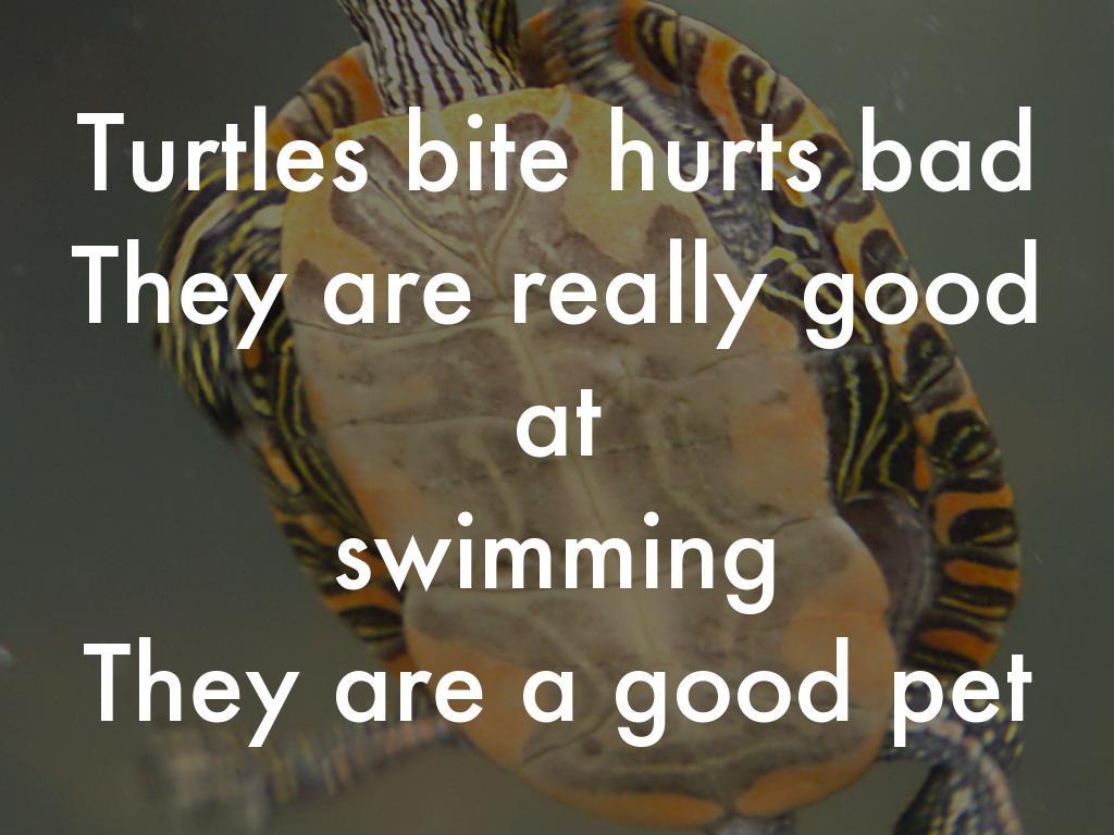 Turtle By Sam