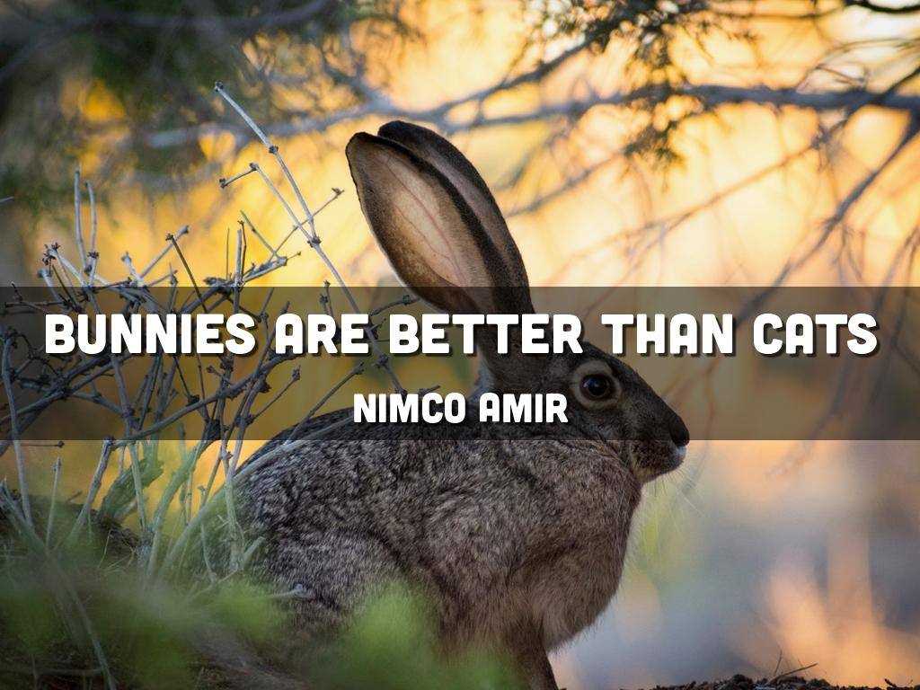 bunnies are better than cats