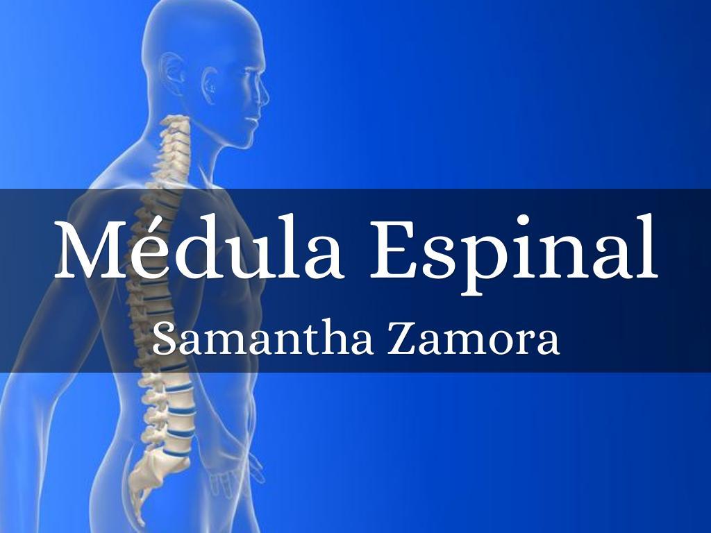 Médula Espinal by nikyzamora