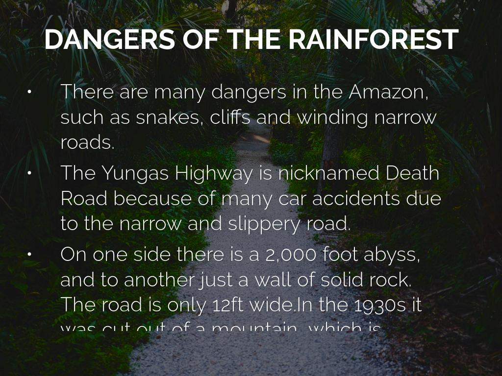 Amazon Rainforest by Ananda Newton