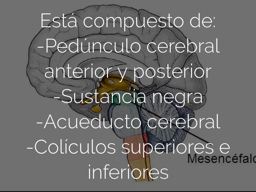 Moderno Ver Episodios De Grises Anatomía Bosquejo - Anatomía y ...