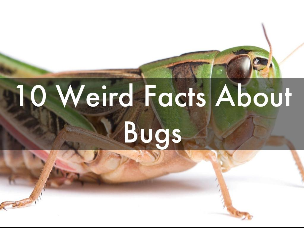 10 Weird Facts About Bugs
