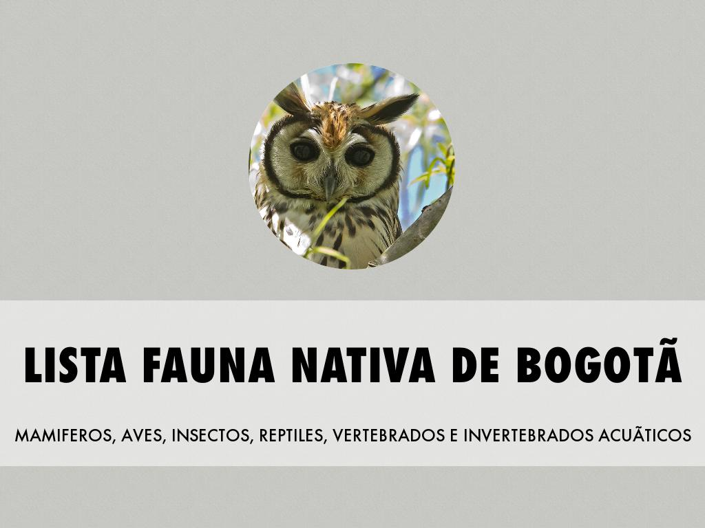 Copia de Fauna Urbana