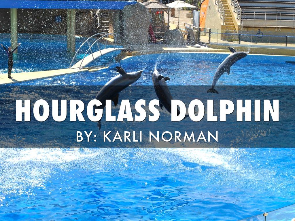 Copy of Karli Hourglass Dolphin