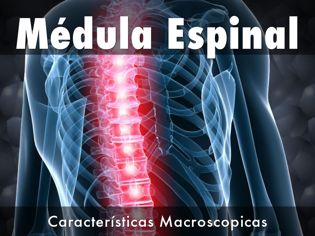 Médula Espinal by isalintch1599