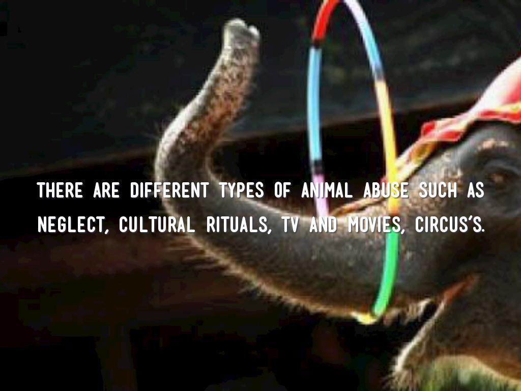 Animals Lives Matter A lot by Eve Kavanagh
