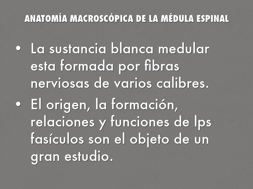 MÉDULA ESPINAL by kerlycarolina12
