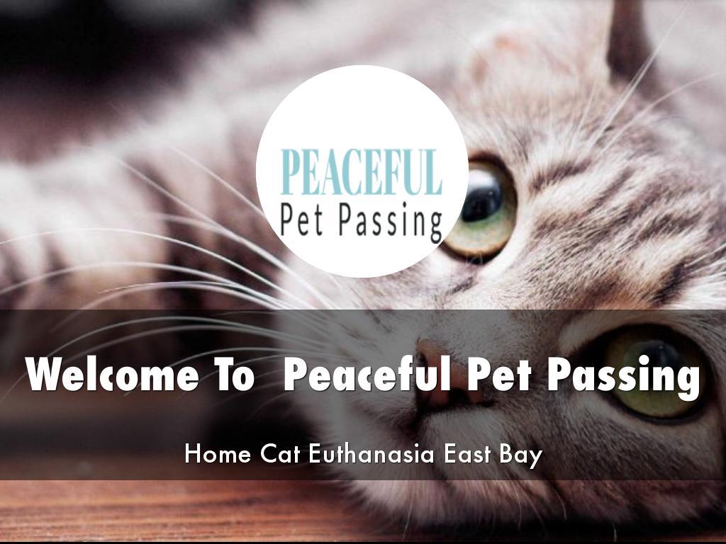 Peaceful Pet Passing Presentations